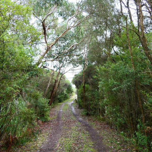 A narrow access road to a property surrounded by dense native vegetation.
