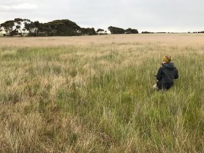 EPBC Plains Grassland offset site
