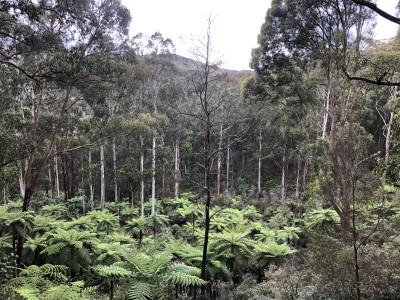 a natural rainforest