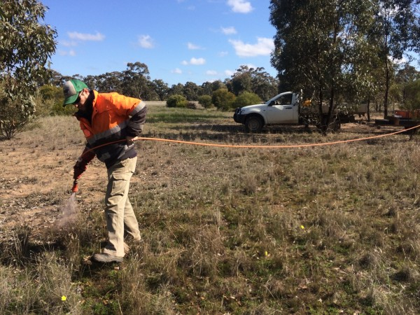 Ray tends to native vegetation on site a Wedderburn Junction